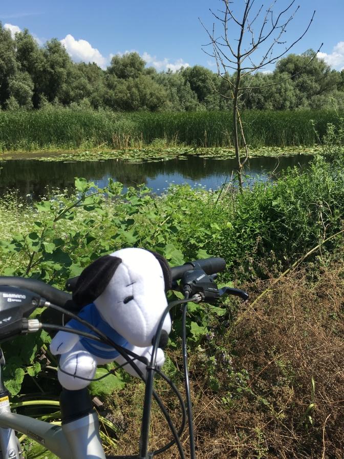 Cu bicicleta si doi copii in Delta: o tura de familie pe un traseu de exploratori